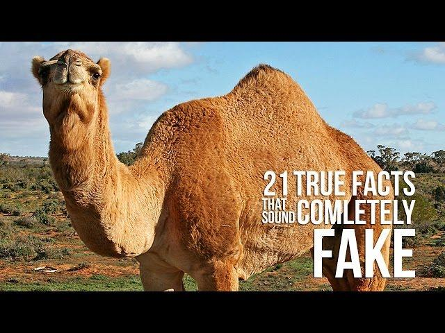 21 True Facts That Sound Completely Fake